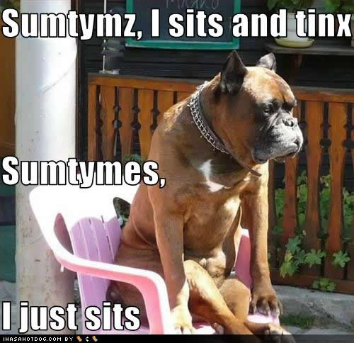 Funny-dog-pictures-sits-tinx